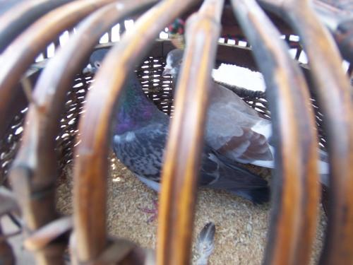 jail birds